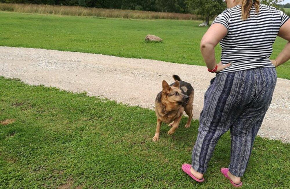 Hallikese käekäik | väärkoheldud koera eluteel seisab ees suur muutus