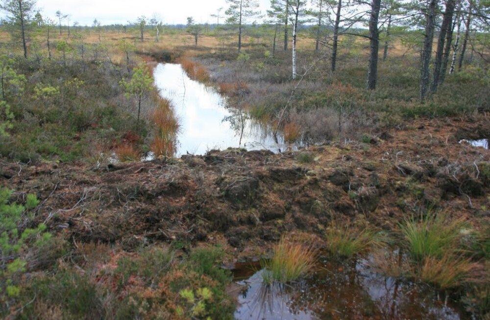 Alam-Pedja looduskaitsealal rajatakse esimesed paisud soo taastamiseks