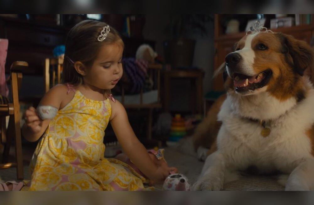 ТОП-5 добрых фильмов о питомцах, которые вы могли пропустить в прошлом году