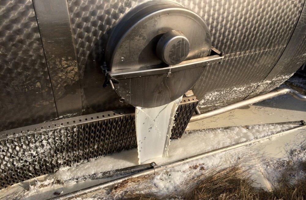 VIDEO | Piimaauto tsistern läks kreeni ja piim voolas kraavi