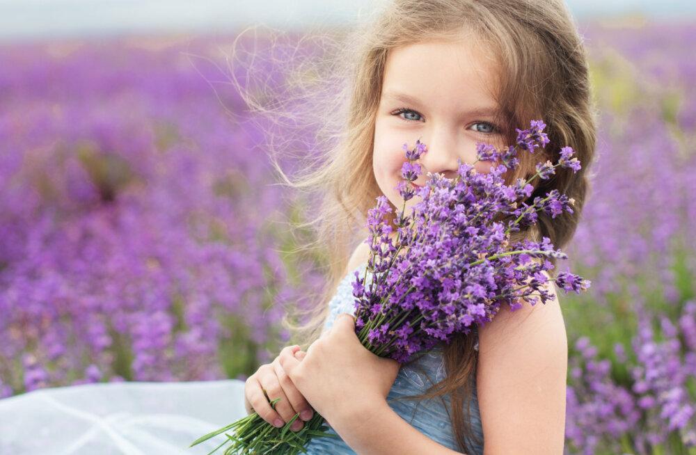 Rahustav lavendel sobib nii toidulauale kui ka ravimikappi