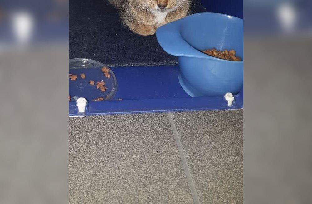 Kohutav avastus: pererahva poolt hüljatud kass kandis endaga kaasas ammu surnud looteid