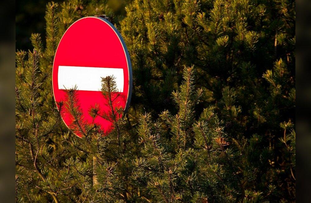 Juuremädanik hävitas Muhus metsa