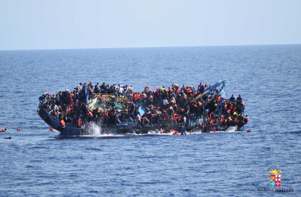 Migrandid merel.