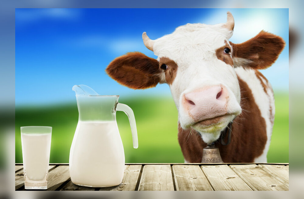 Uuring: piimatoodete tarbimine hoopis suurendab luumurdude riski