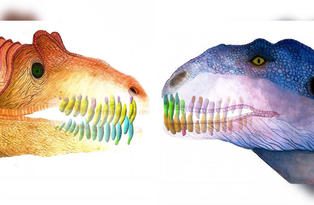 Saa tuttavaks: pööraselt õgiv dinosaurus, kes iga kahe kuu tagant hambaid vahetas