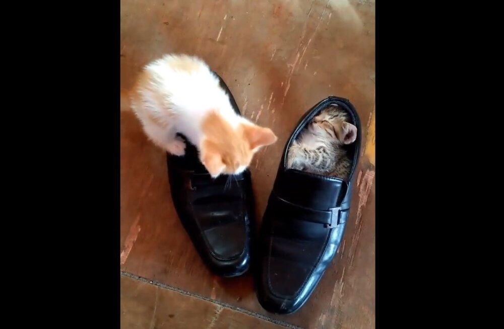 Ülinunnu VIDEO | Vaata, kuidas need kaks kassipoega end magama sättisid