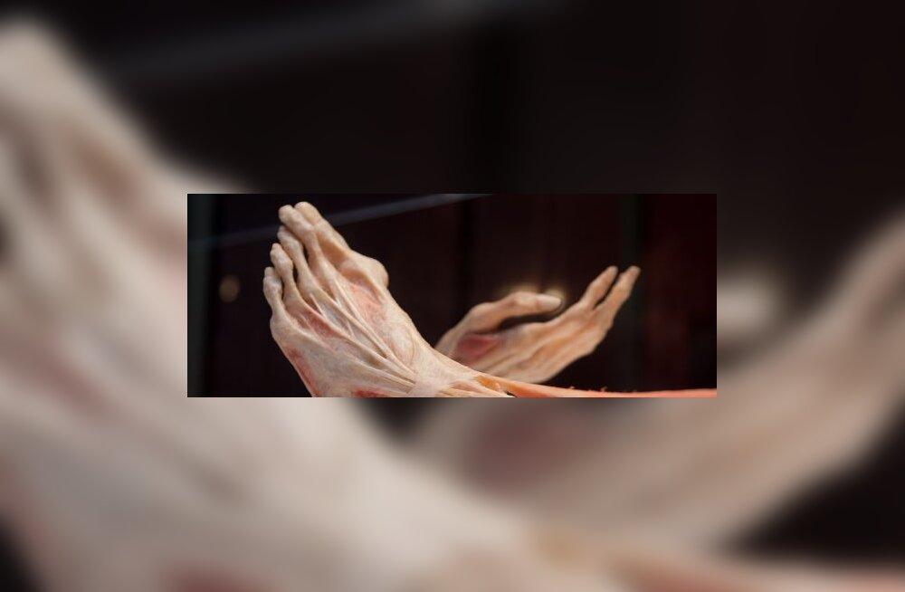 Jalg ja Käsi