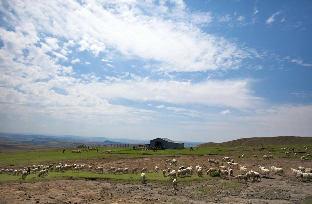 Imelised FOTOD | Turistid arvasid end lambaid nägevat, kuid selgus, et nad olid tunnistajaks hoopis millelegi muule