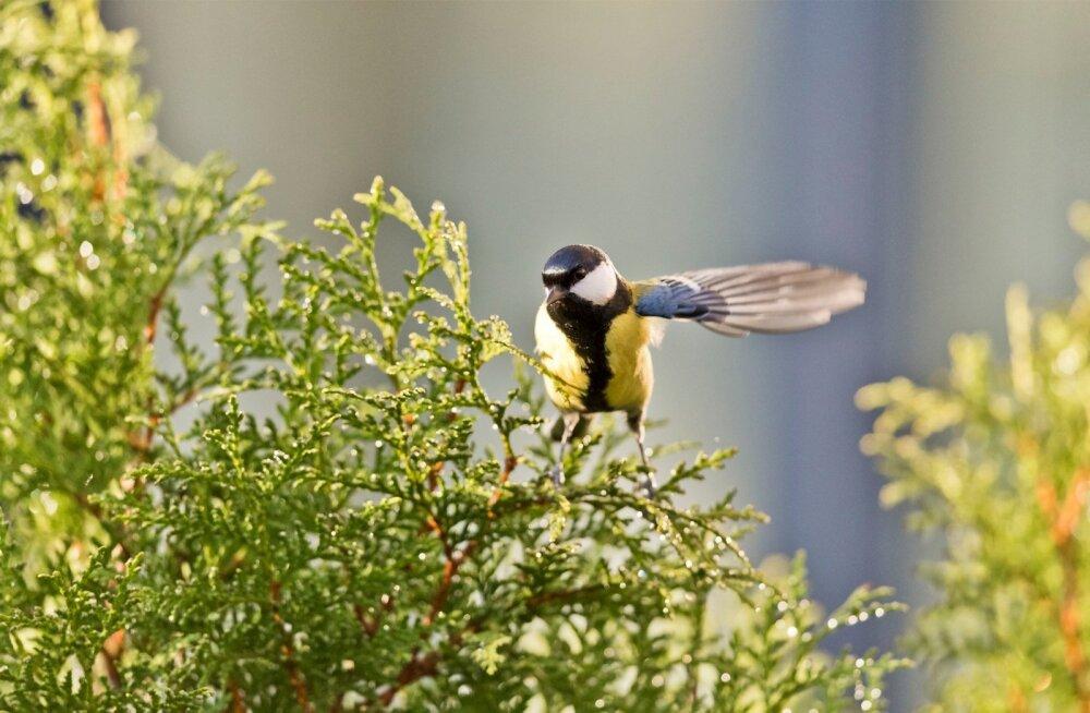 Aiapidajad saavad veebipäevikusse kirja panna oma aia loomad ja taimed