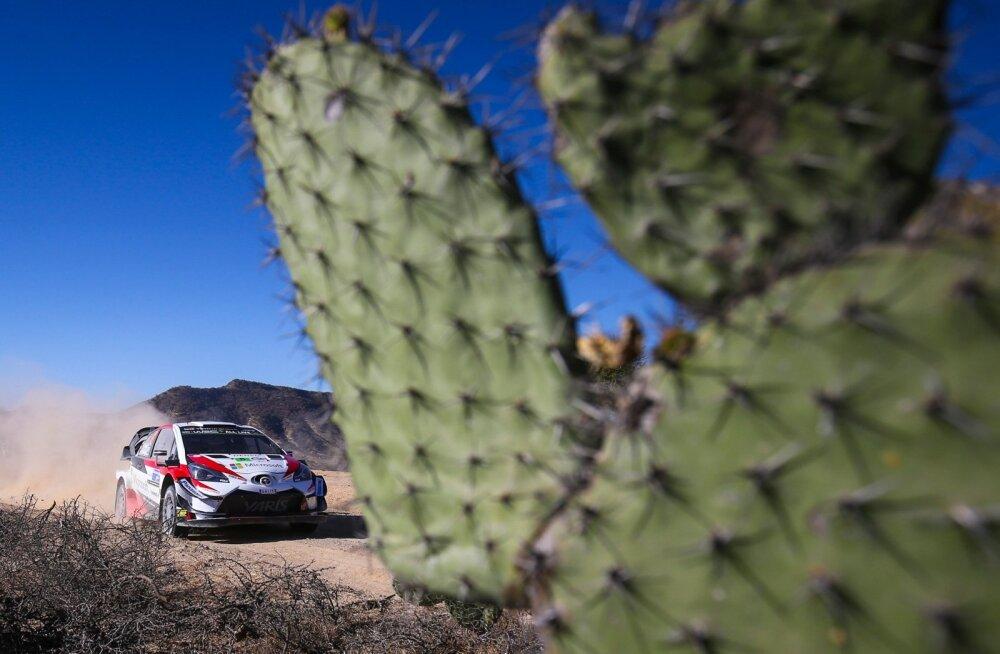 Kui kihutad kaktuste vahel, on selge, et väljas on kuum.