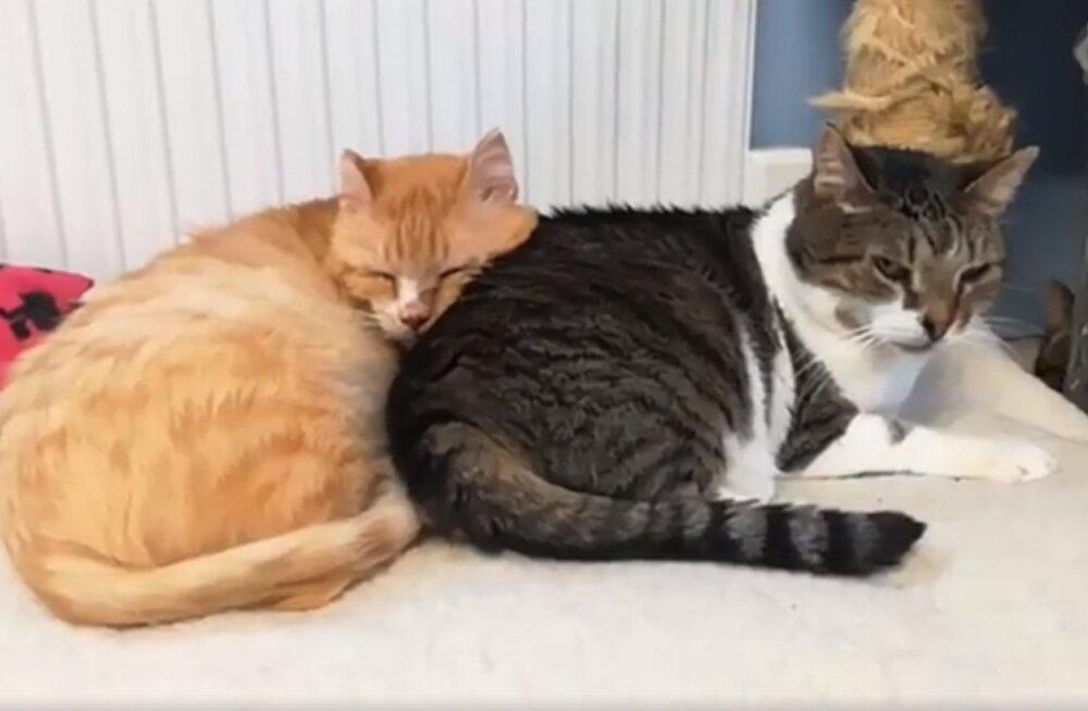 Südamlik VIDEO | kurva minevikuga Kassiabi kassid ei lase üksteist enam hetkekski silmist