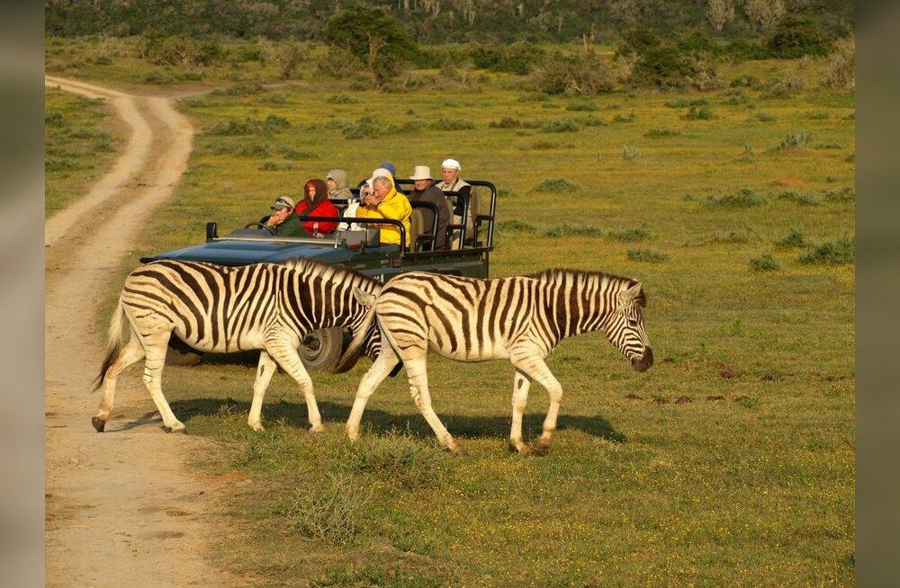 Maakodu reis: Lõuna-Aafrika õitsvad künkad