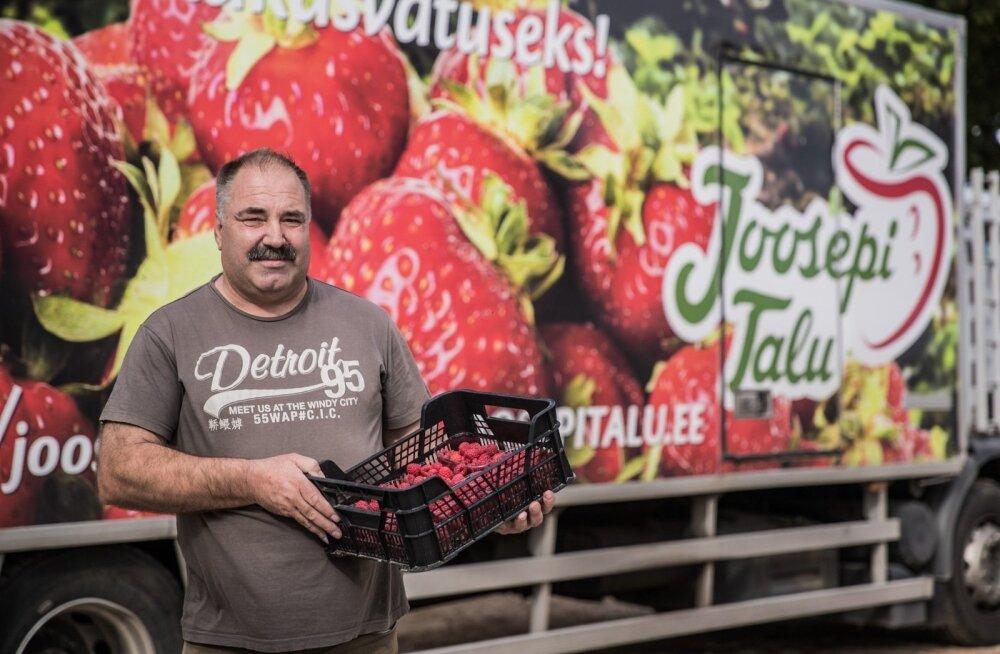 Производитель клубники дает работу летом сотне украинцев: ясно, что Калевипоэг из Финляндии не вернется