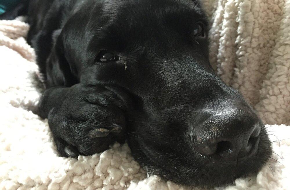 Liigutav lugu: koera adopteerinud nooruk oli lemmikust juba loobumas, kui ta avastas kirja koera eelmiselt omanikult - see muutis kõike