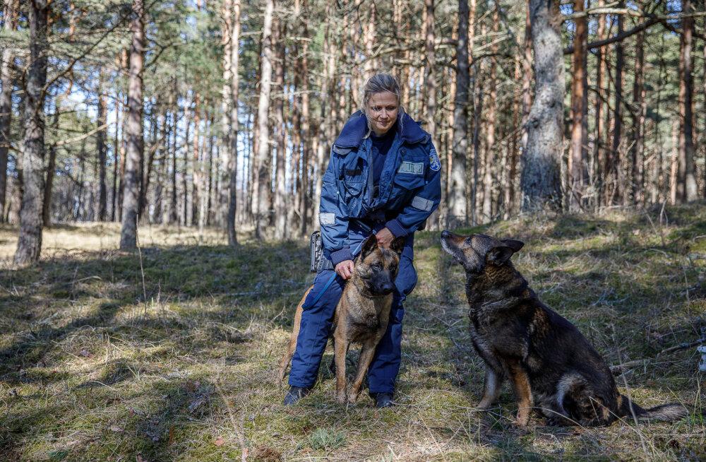 MEIE MAA | Kadunud meest käisid otsimas eritreeningu läbinud koerad