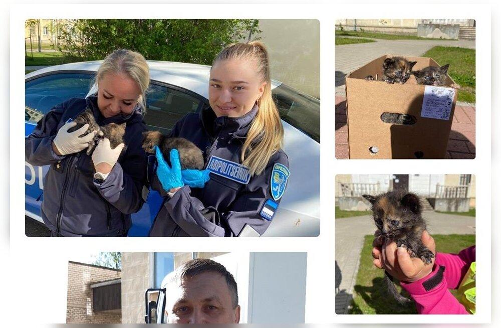 ФОТО | В Силламяэ полиция спасла от чаек трех брошенных котят