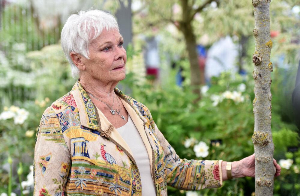 Dame Judi Dench halvast nägemisest: autojuhtimisest loobumine oli kõige kohutavam hetk mu elus