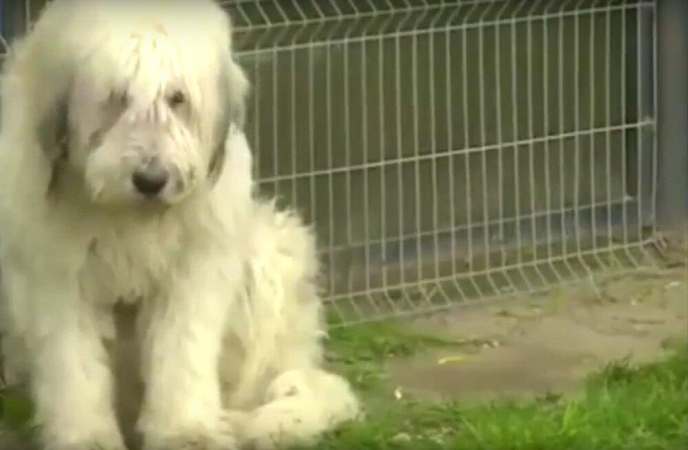 Ülim truudus: Koer ei ole viis aastat lahkunud paigast, kus ta oma peremeest viimati nägi