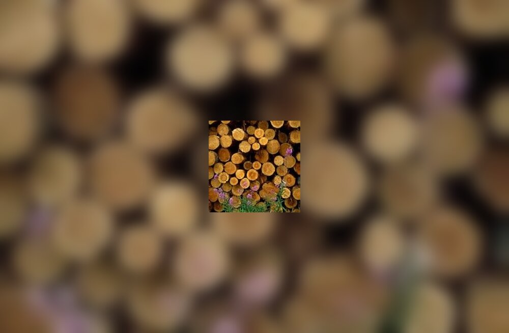 [ÄP] Ebaseaduslik metsaäri maksis Sonda volikogu esimehele koha