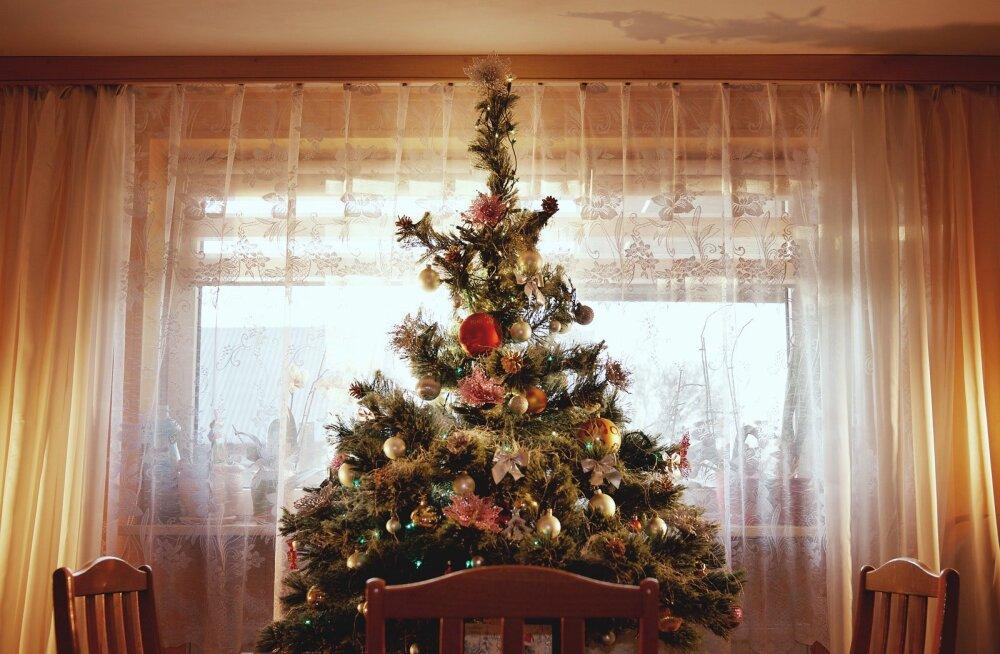 Kuidas jõulukuuske õigesti hooldada ehk 3 nippi, et puu peaks pühadeni ilusasti vastu