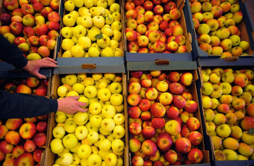 Rootsis tõotab tulla 50 aasta halvim õunasaak