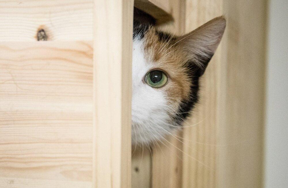 Почему кошки тянутся к людям, которые их не любят?