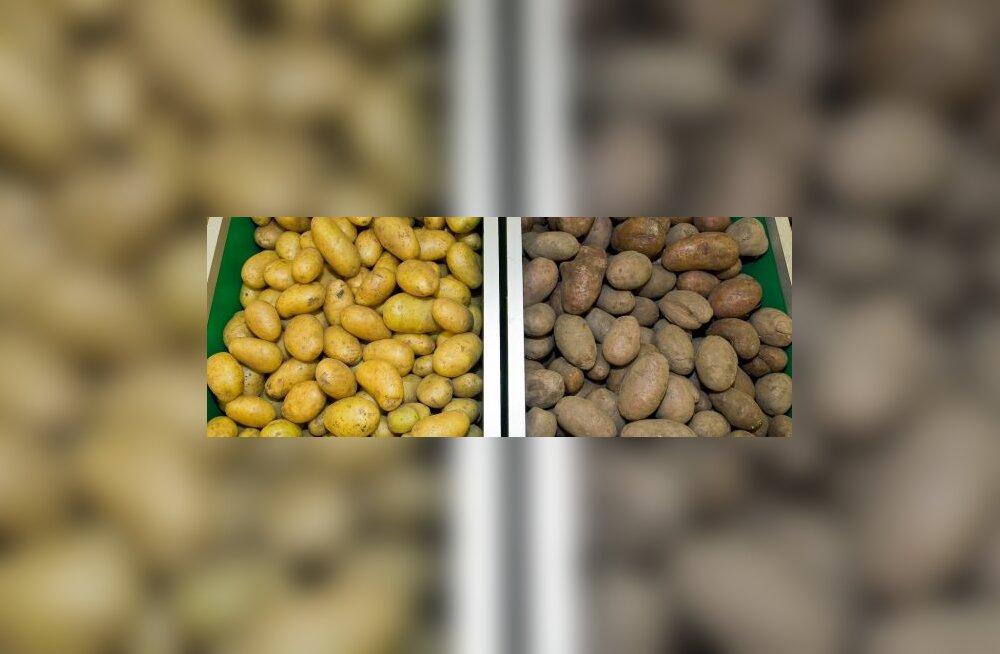 Keskerakonna kartul on poemugulast 2 korda kallim