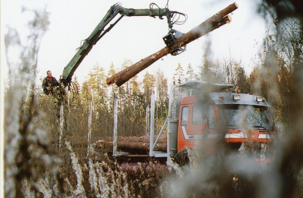 Metsavargus. Foto on illustratiivne.