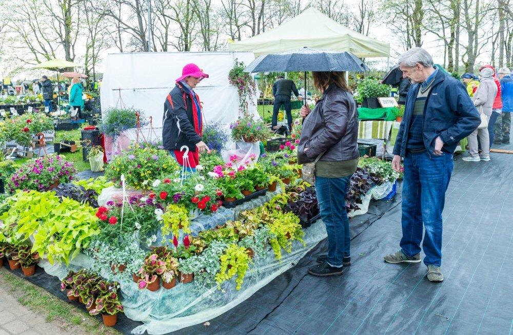 Tänavune Sigulda lillelaat purustas taas külastajarekordi ning tõi kokku 75 000 inimest.