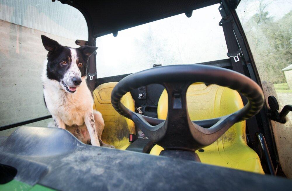 Koer traktoriroolis