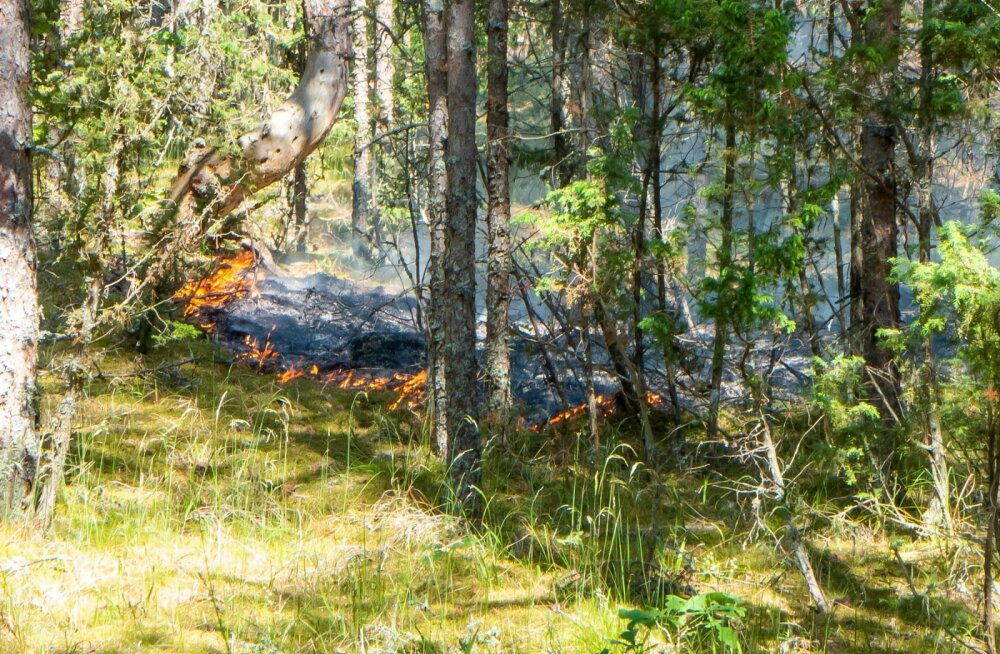 Metsapõleng. Foto on illustratiivne.