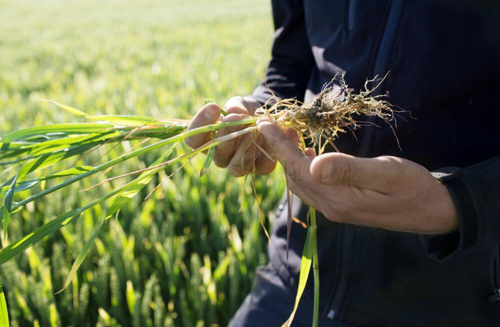 Edukas globaalne ettevõte otsib agarat agronoomi