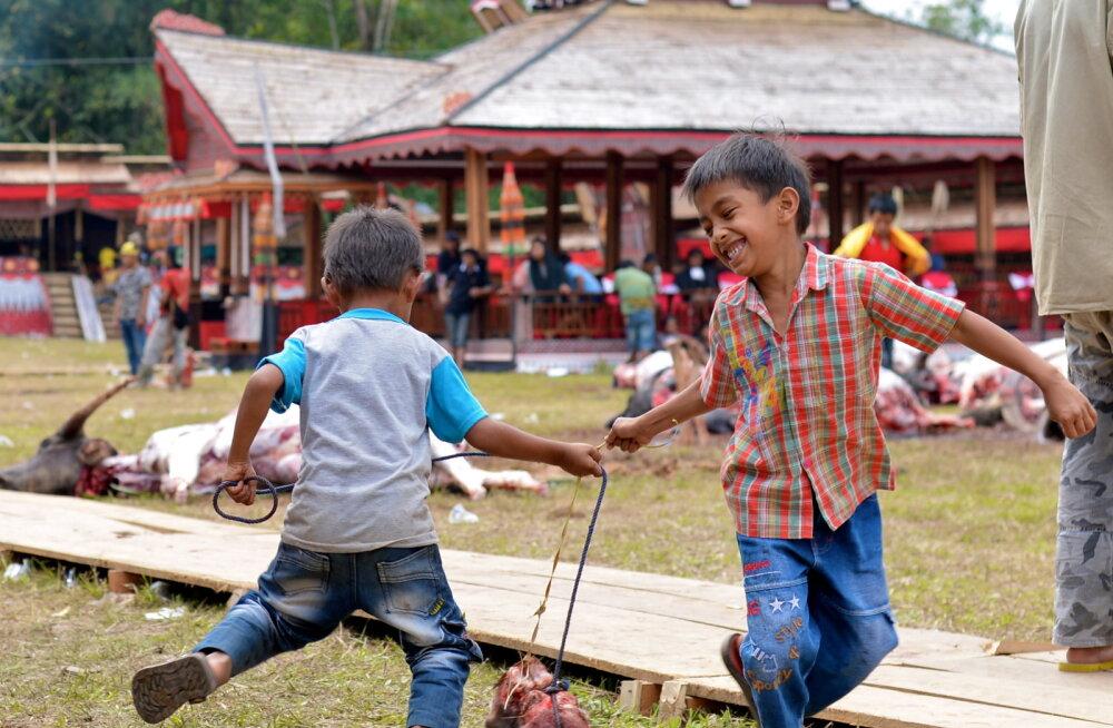 KURIOOSUM: Indoneesia laste mänguasjad valmivad ohverdatud loomadest!