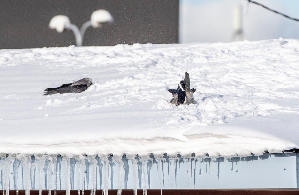 Varesed vallatlesid lumes