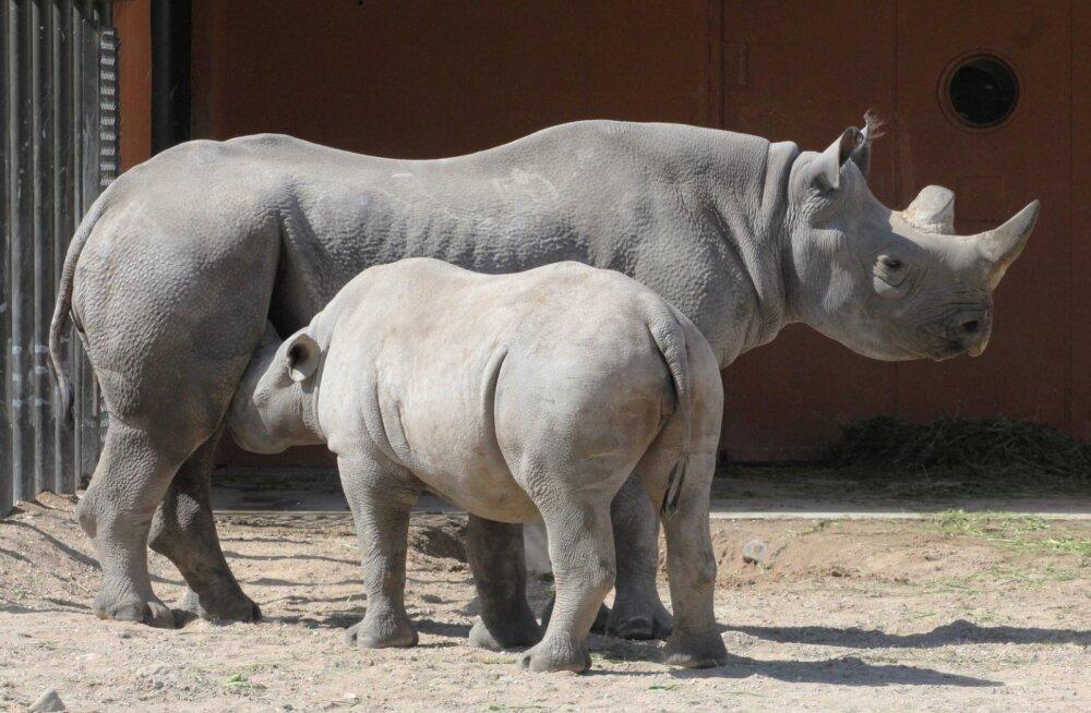 ÜRITUS   Loomaaed kutsub tähistama ülemaailmset ninasarvikupäeva