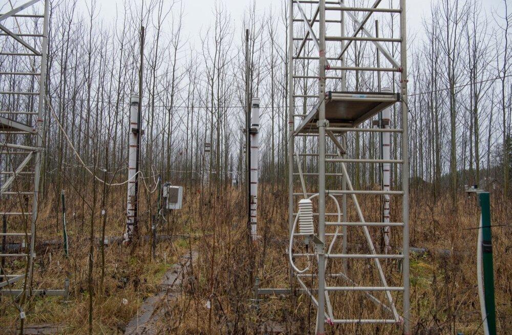 Selleks et metsa ning keskkonna kohta midagi välja uurida, on teadlastel vaja kaua ja järjepidevalt tööd teha. Pildil FAHM ehk metsaökosüsteemi õhuniiskusega manipuleerimise eksperimendi katseala Tartumaal.