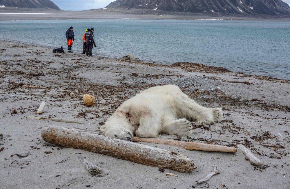 Jääkaru ründas Arktikas turismilaeva turvameest: loom tapeti