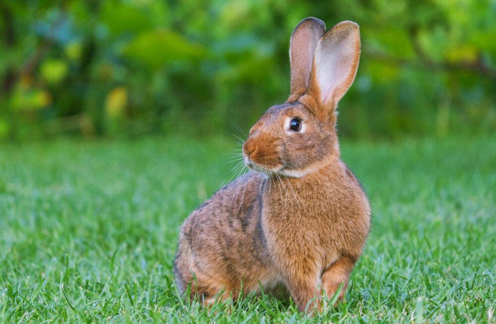 Mida näitab sinu looma-aasta märk? 12 fakti Jänese aastal sündinud inimeste kohta