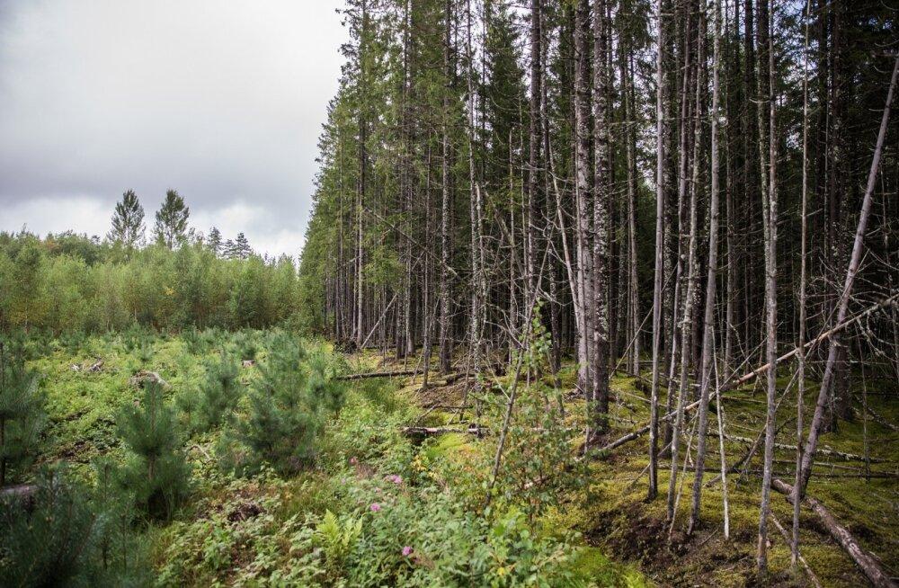 Rahvaalgatus kliimaneutraalse Eesti toetuseks ootab allkirju