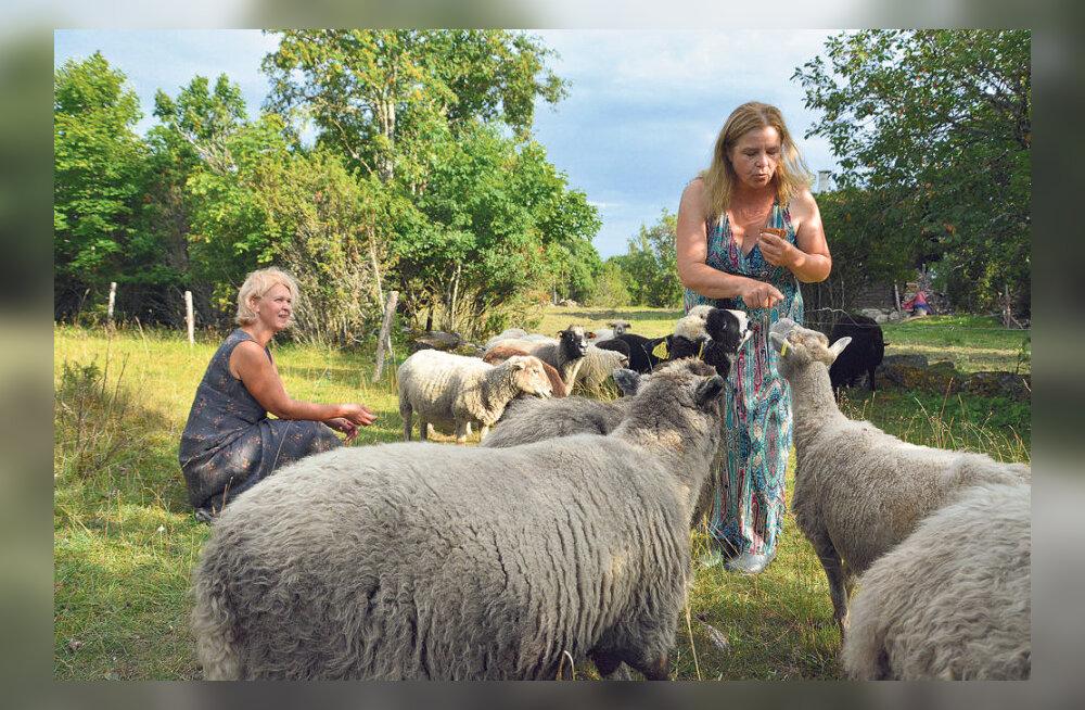 Muhulased asutasid lambakolhoosi
