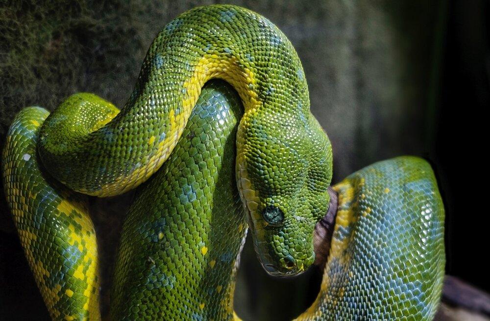 ÜLINALJAKAS VIDEO   Vaata, kuidas tembutaja inimesi maoga ehmatab