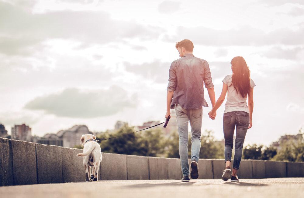 Aegumatu dilemma suvel: kas võtta koer kaasa või jätta koju ehk mida sinu koer tegelikult tahab?