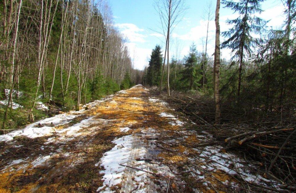 Kevad lõpetab talvised metsatööd