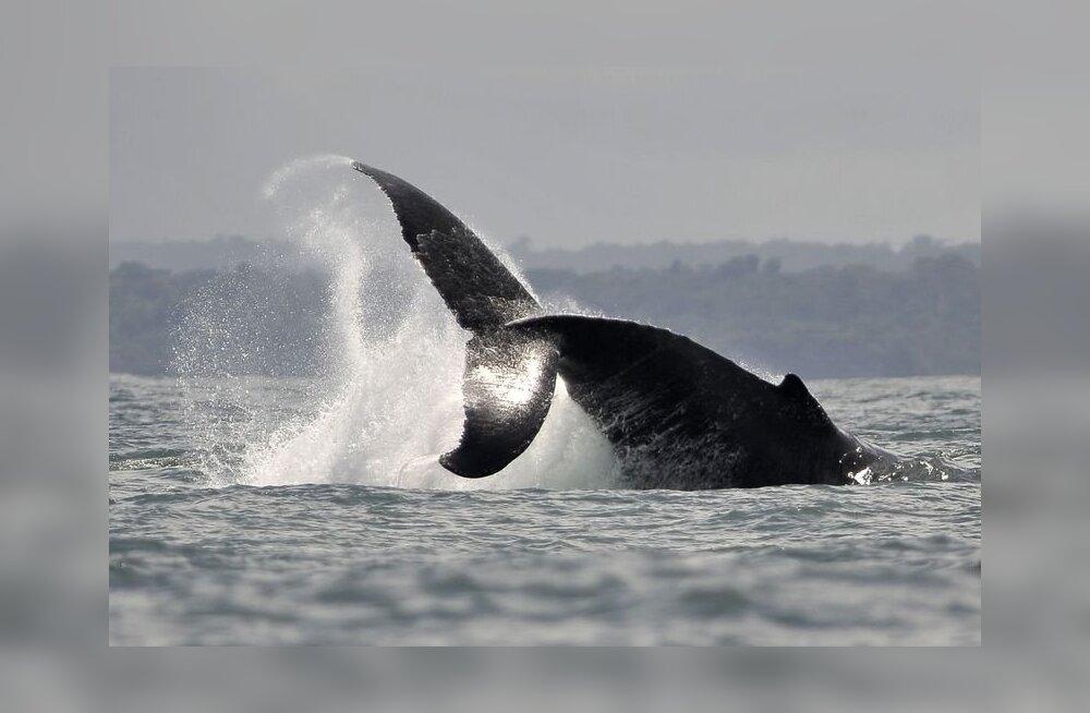 Vaaladel tekivad päikesepõletusest villid
