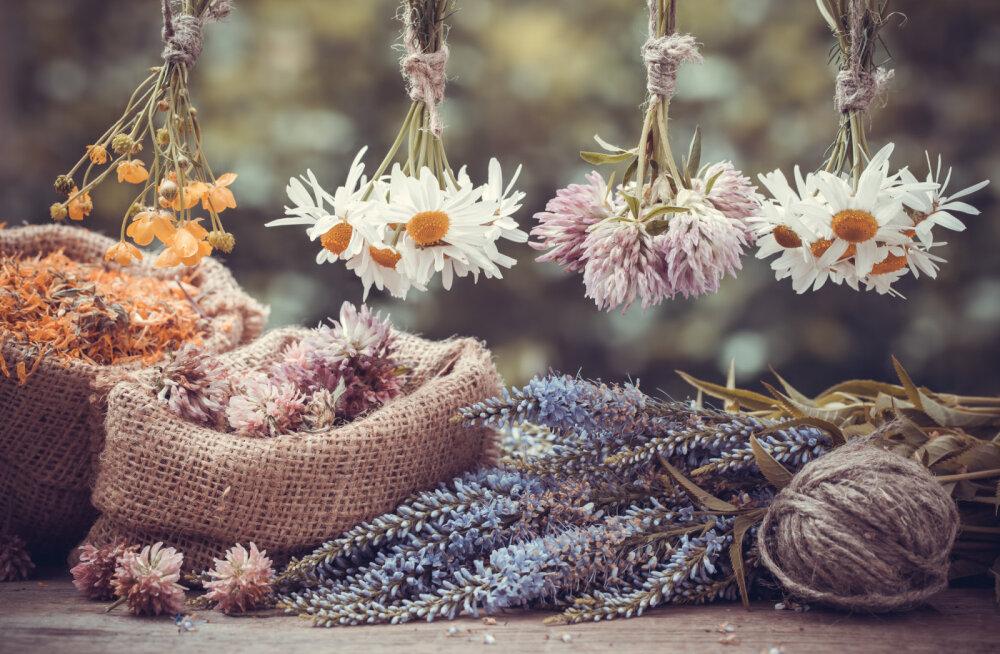 Taimede maagilised omadused: millised taimed toovad õnne ja millistest tasub hoiduda?