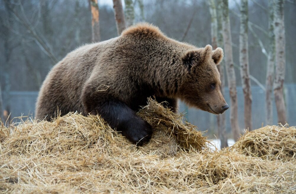 Karude küttimismaht on peaaegu täidetud