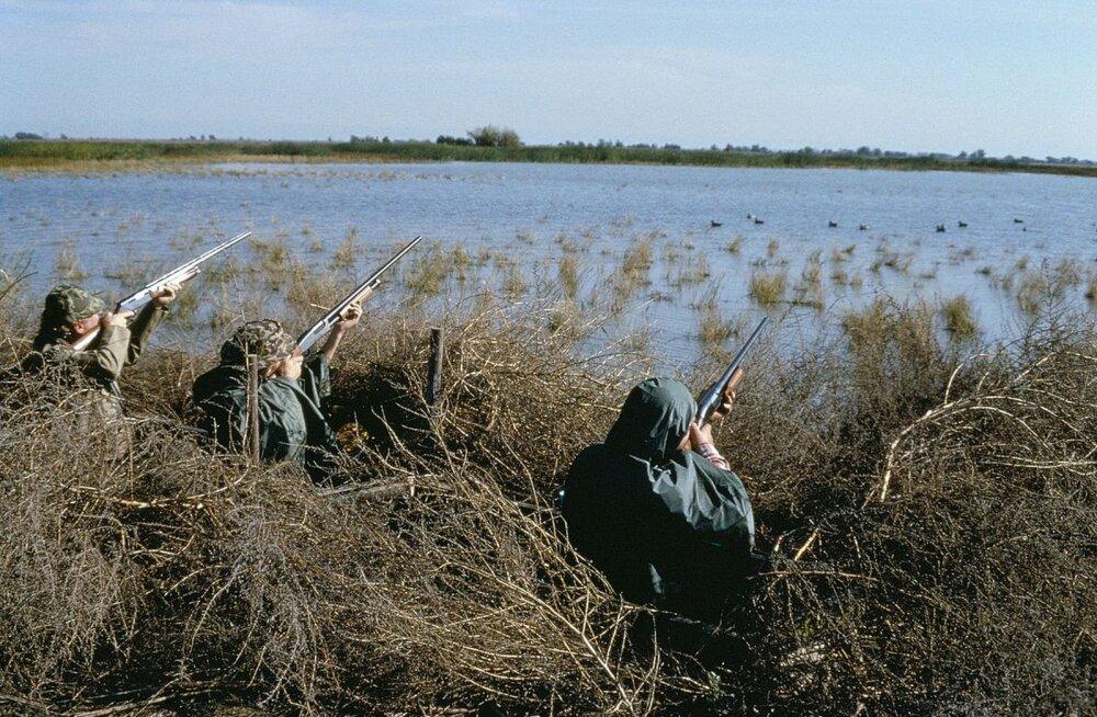 Kevadise linnujahi keelamine Kasahstanis on pesitsevate veelindude arvukust suurendanud