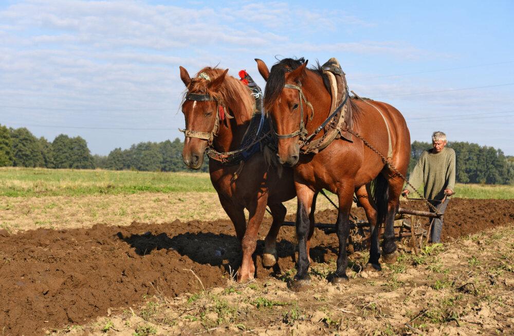 Rahvakalendri järgi on 14. aprill künnipäev, mis on aiapidajate ja põllumeeste jaoks tähtis püha