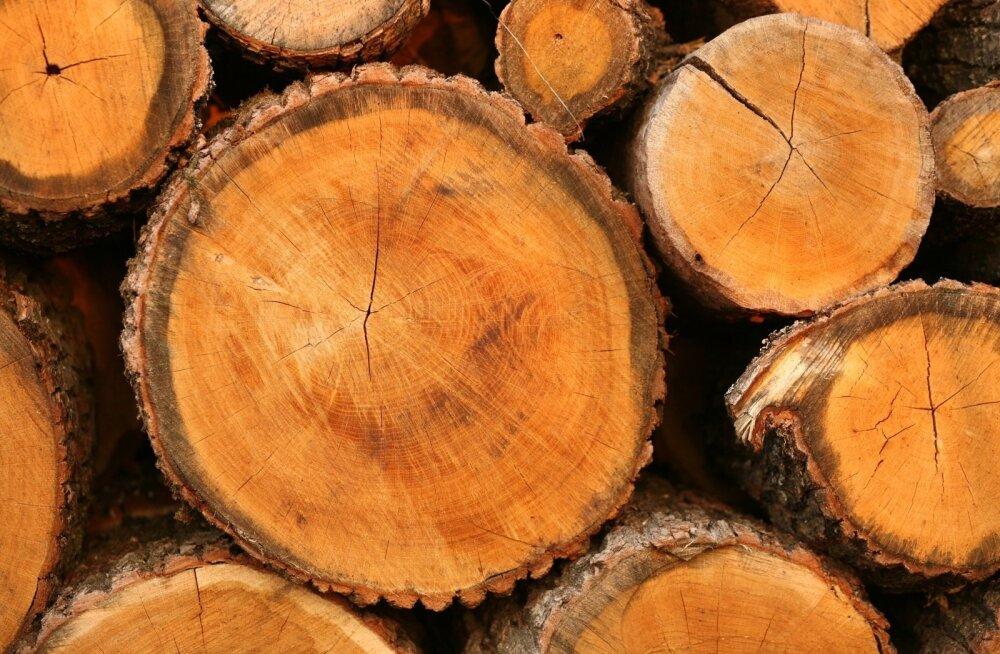Muutused tulumaksus ei olegi puidumüüjale kõige halvem uudis
